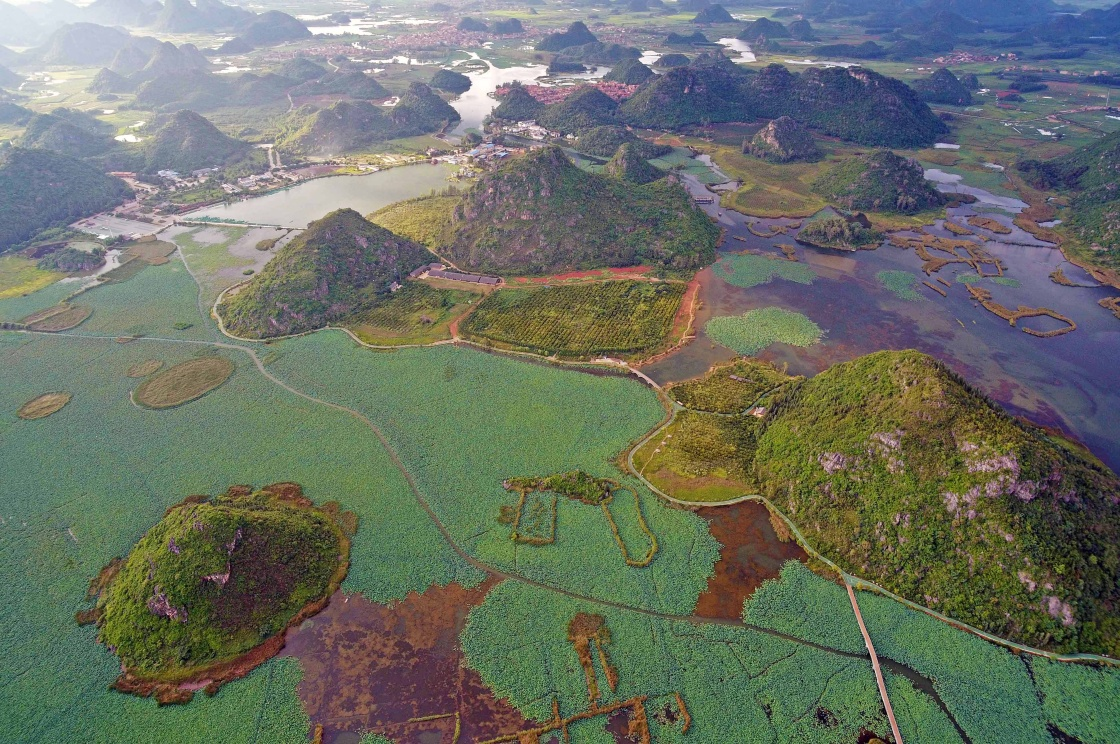 云南丘北普者黑国家湿地公园景色(8月6日无人机拍摄)。新华社记者 杨宗友 摄