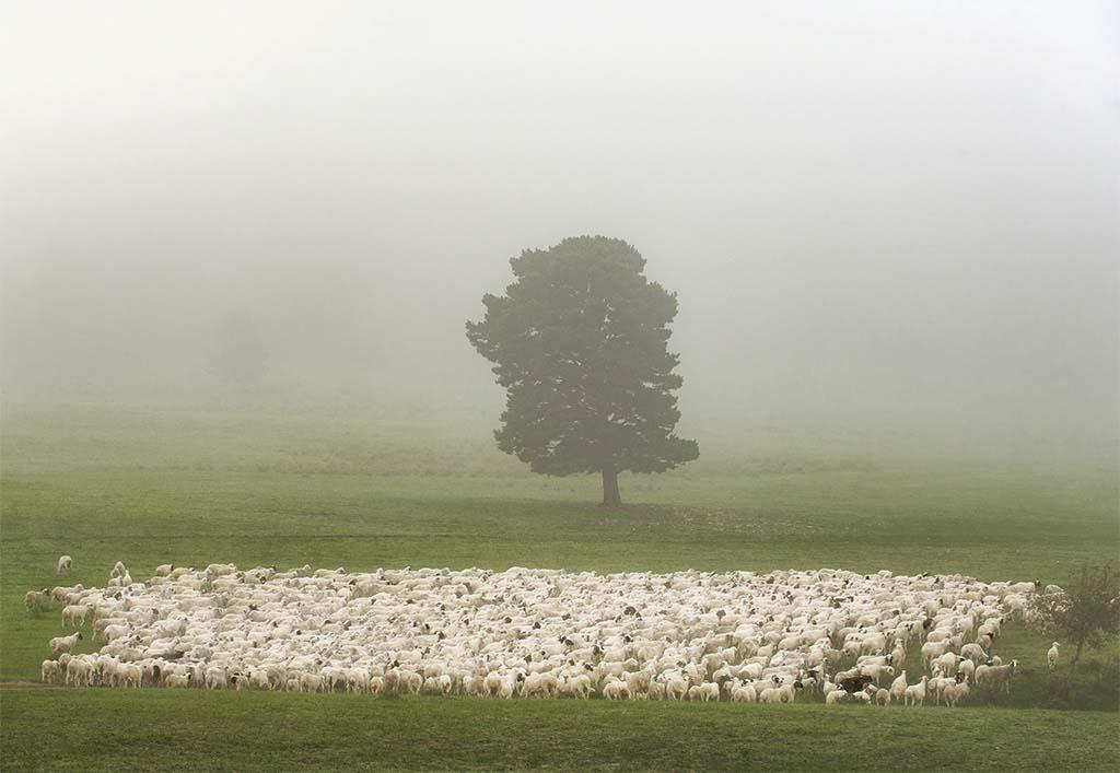 《无边绿野凭羊牧》白云翔 摄