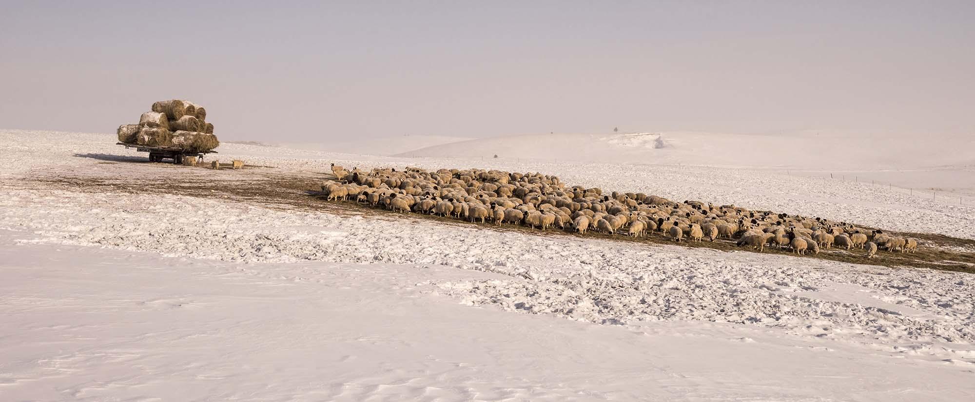 《冬牧》包布赫 摄