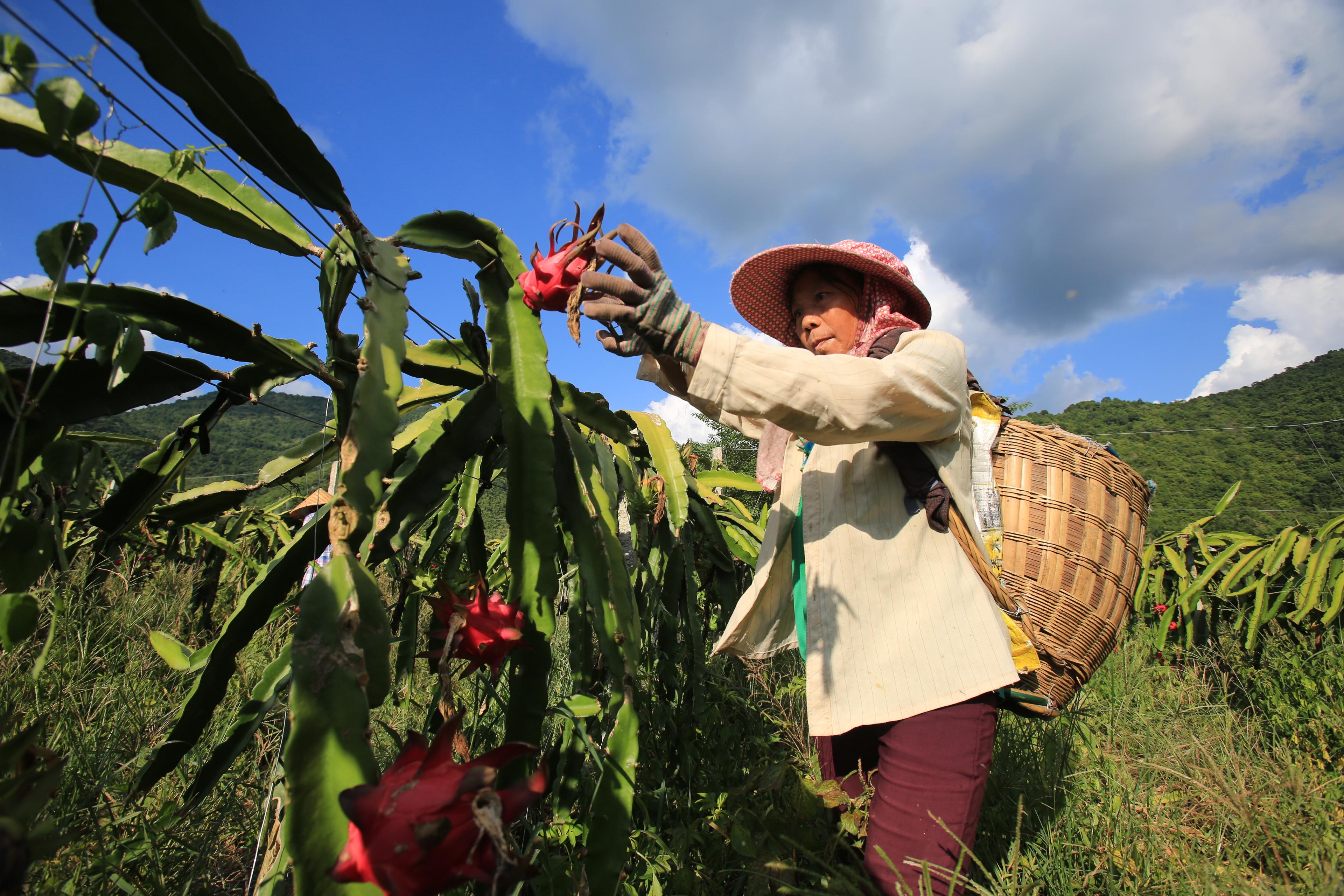 廣西田東:多措并舉助脫貧