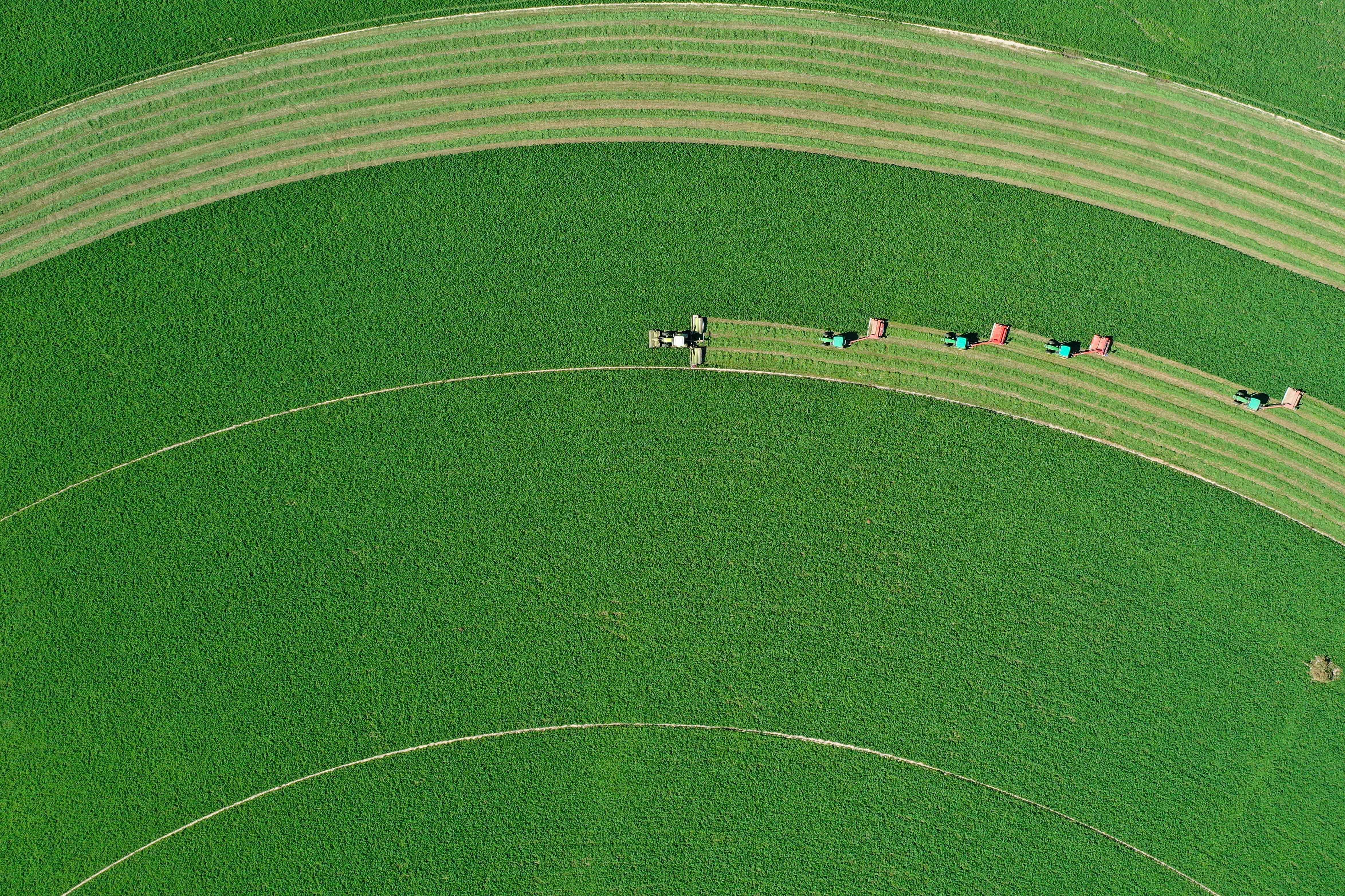 """9月20日,在阿魯科爾沁旗紹根鎮,田園牧歌草業公司在組織機械收割苜蓿(無人機航拍)。 9月23日是中國農民豐收節,新華社記者用無人機帶你""""瞰""""大江南北的豐收景象。 新華社記者 劉磊 攝"""