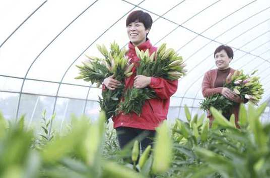 河北南和:花卉種植助農增收