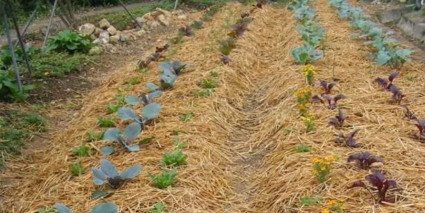 江苏省睢宁县打造生态乡村循环农业的创新之路