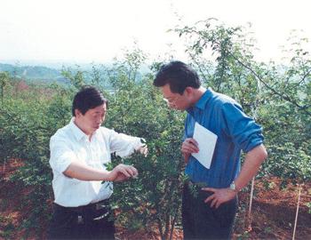 2001年6月,亚游国际游戏官网记者王玉琪在湖北谷城县采访当地花椒产业
