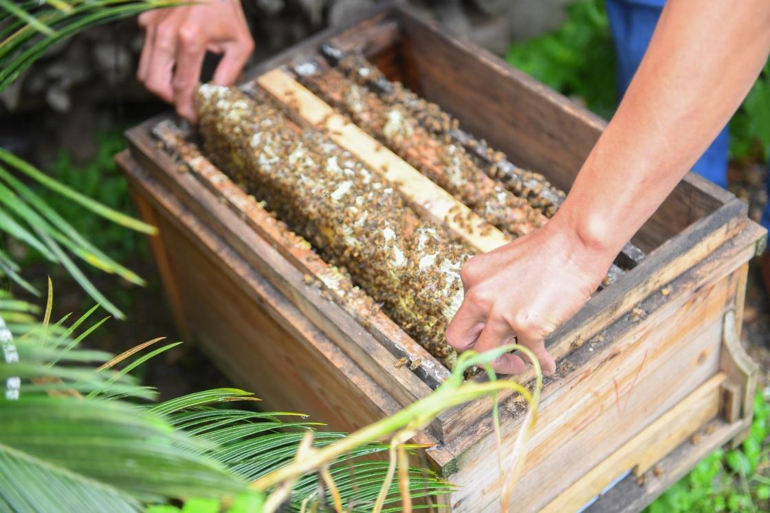 深谷养蜂人