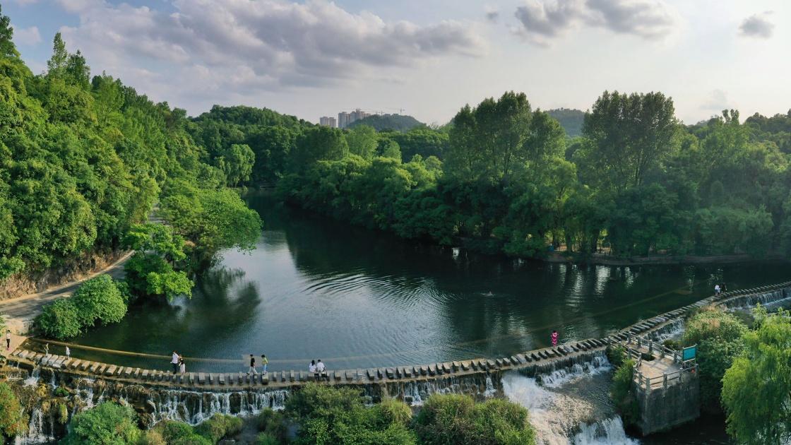 贵阳:初夏湿地景如画