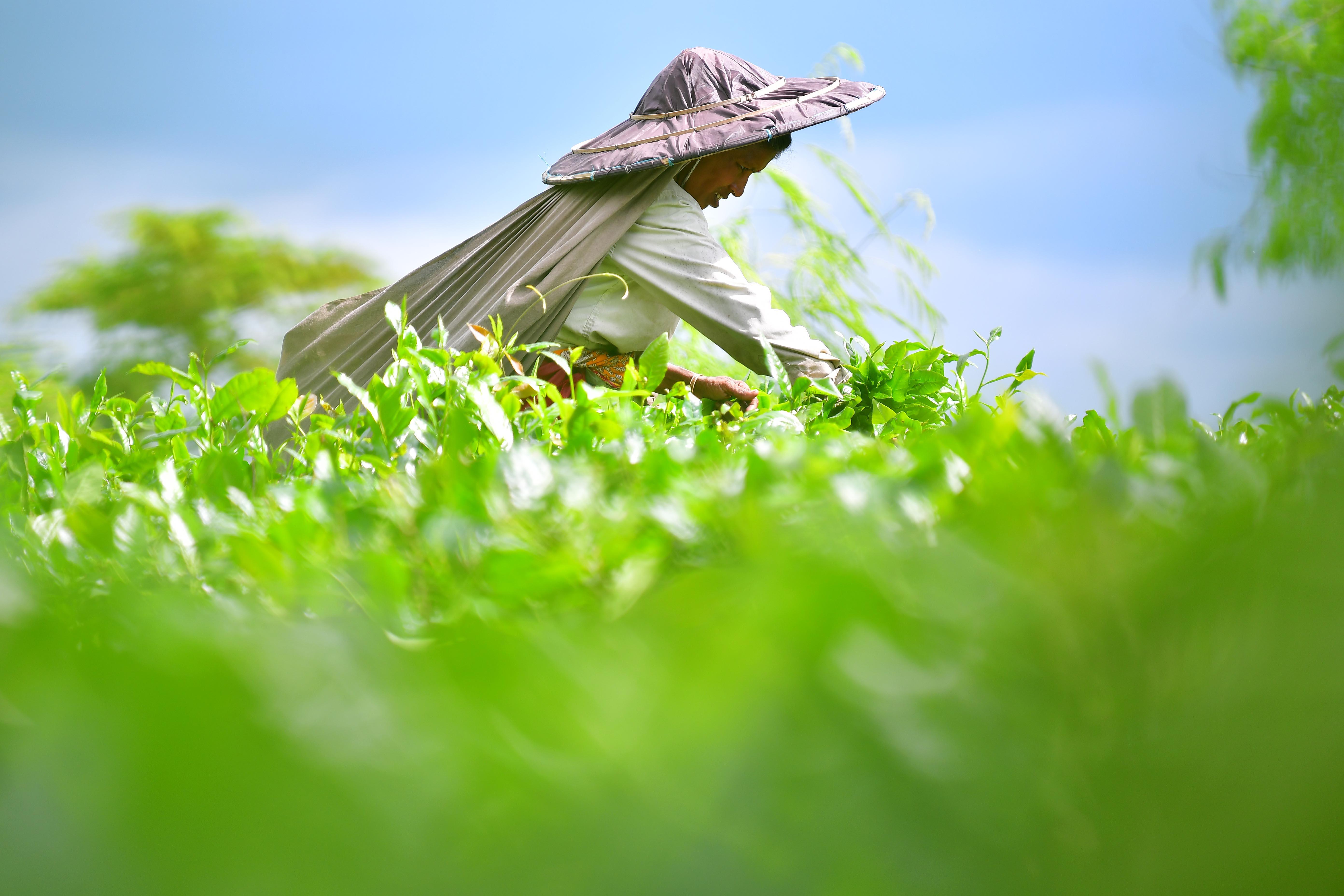 国际茶日:共品茶香茶韵共享美好生活