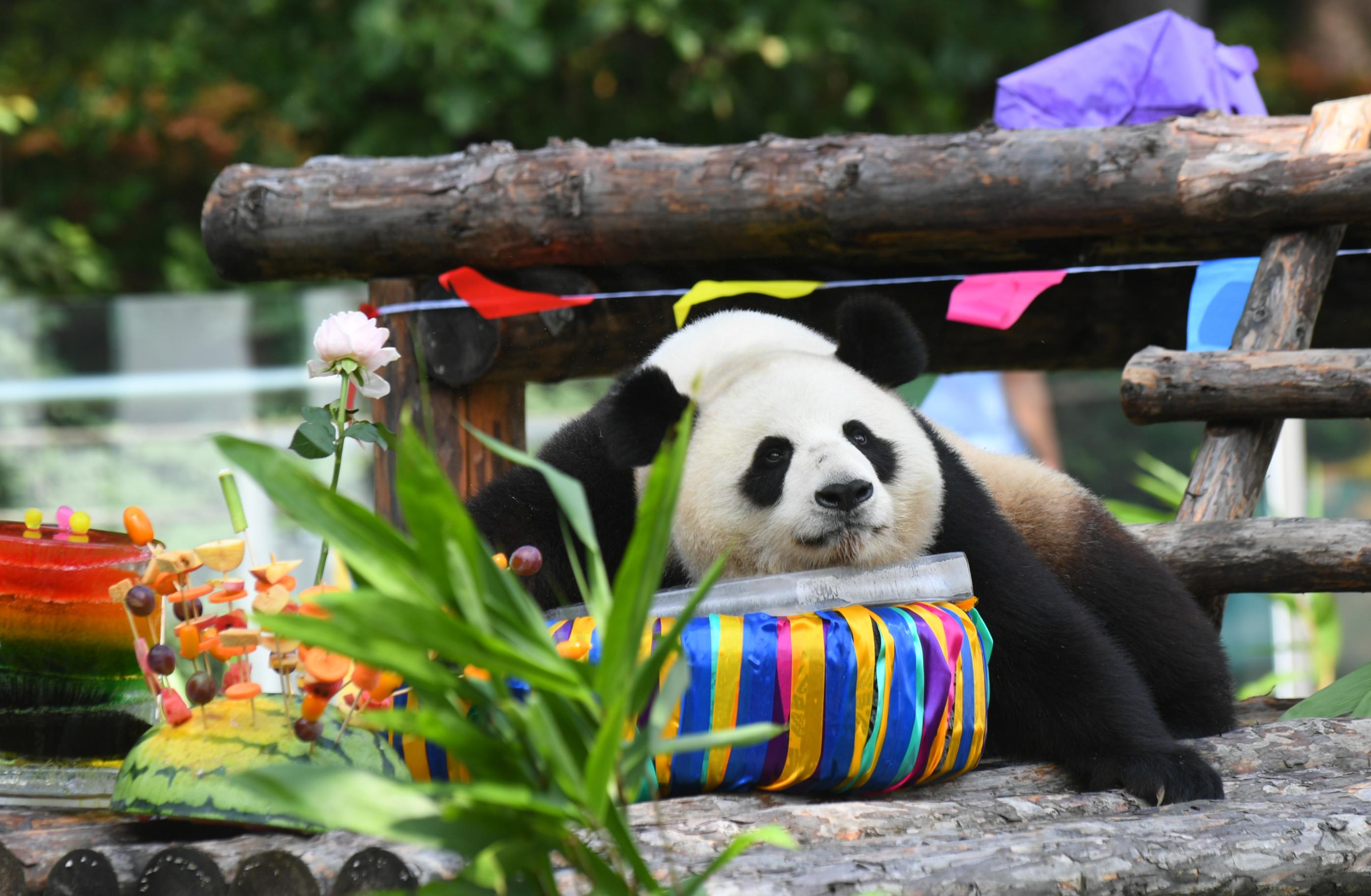 大熊猫2.JPG