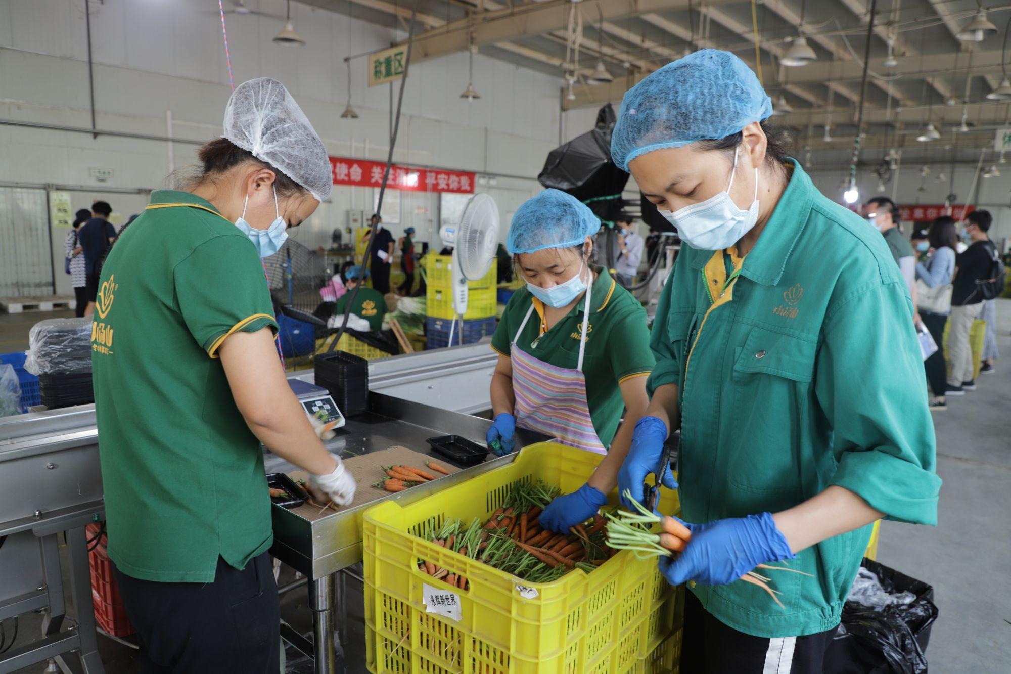 3.在蔬菜加工车间内,工作人员戴好口罩、手套和头套忙碌着。王琳琳 摄