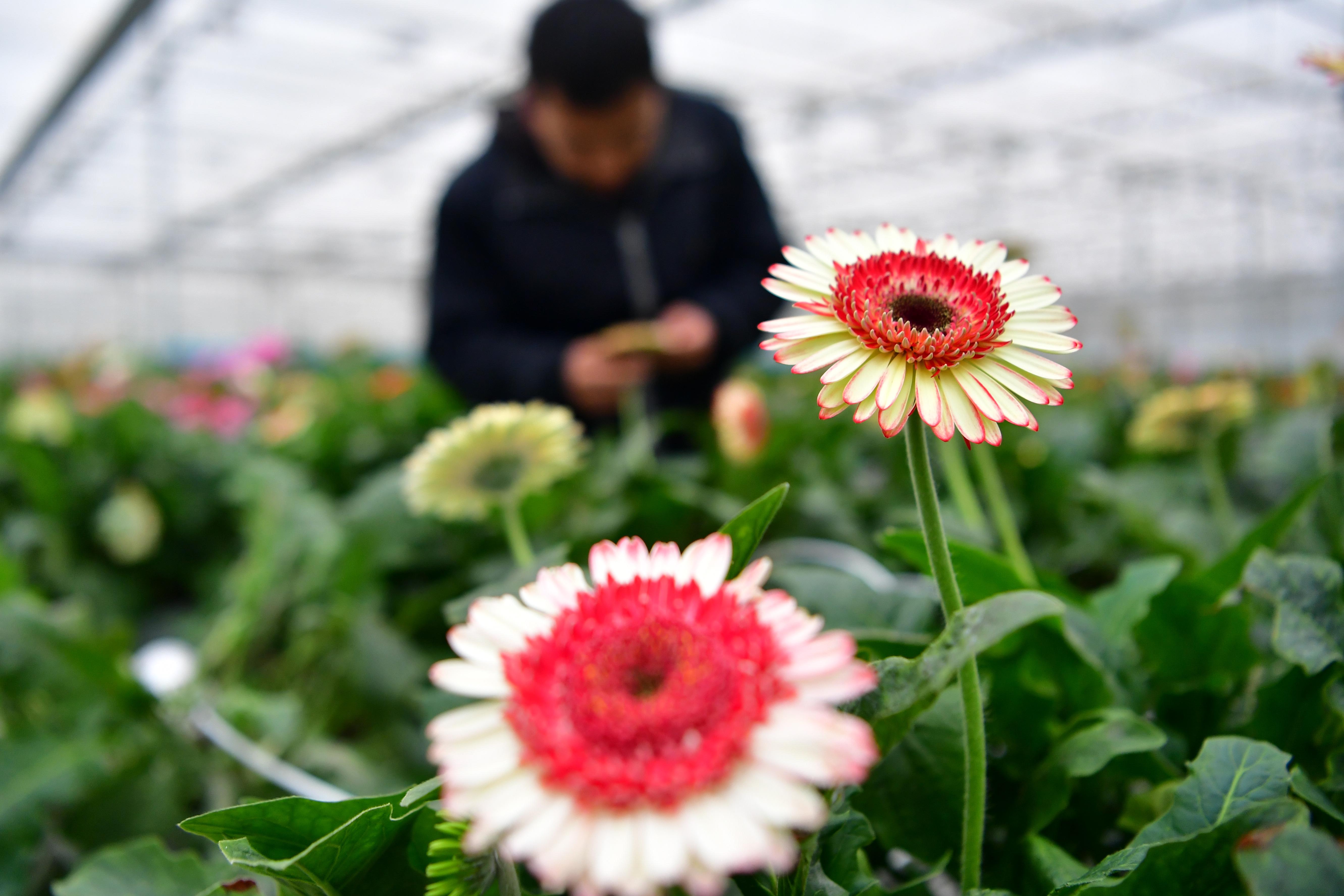 現代農業示范園1.JPG