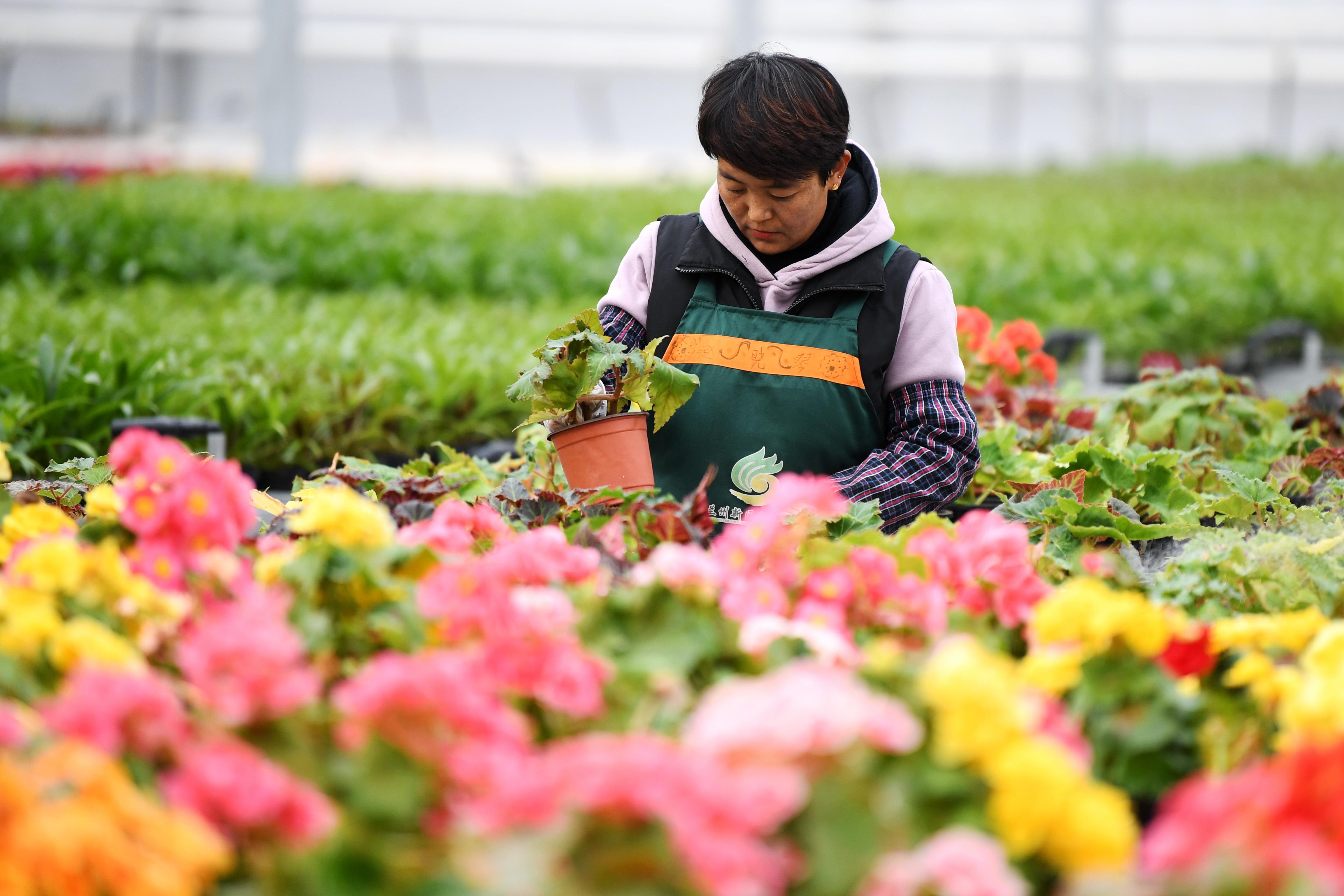 現代農業示范園2.JPG