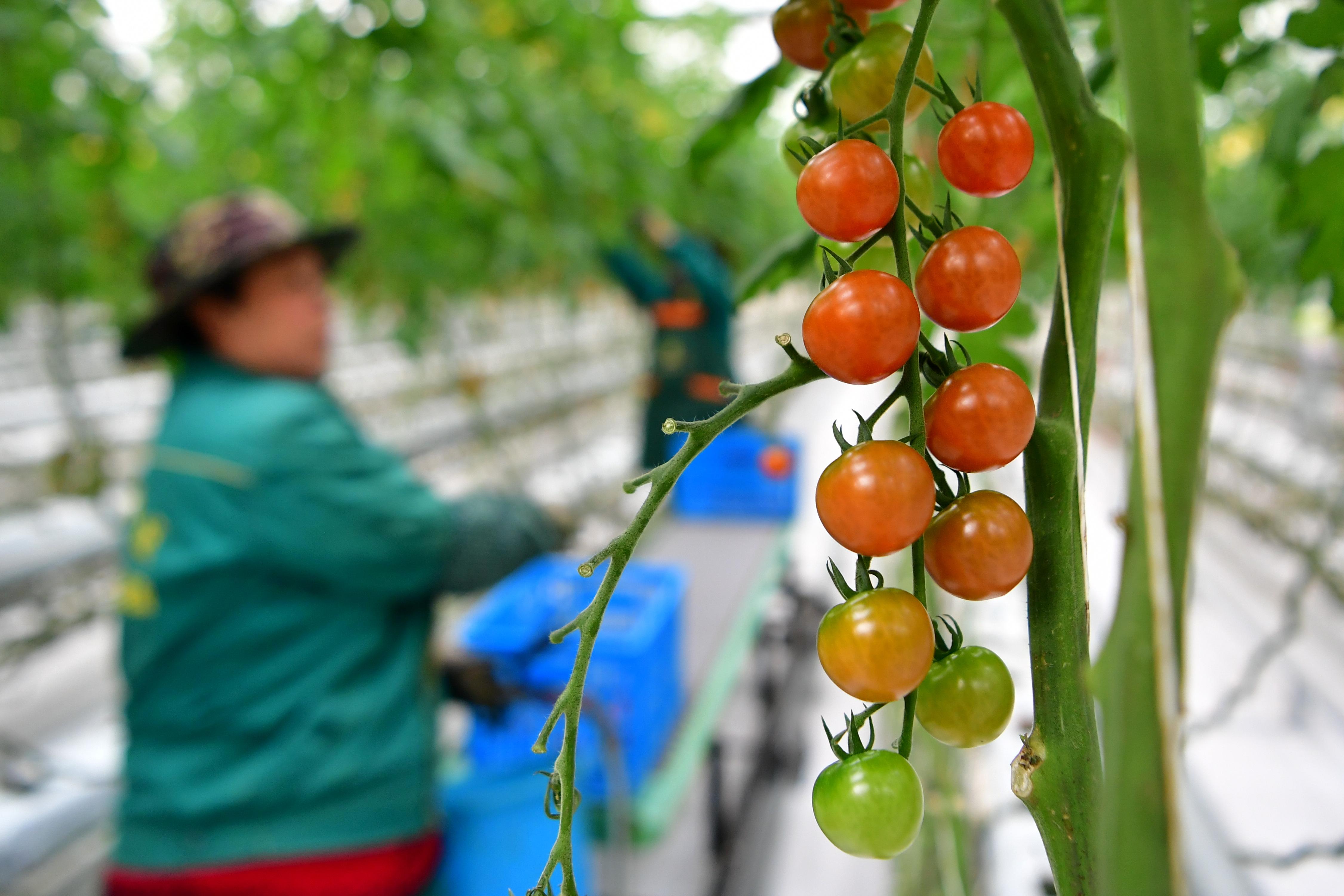 現代農業示范園3.JPG
