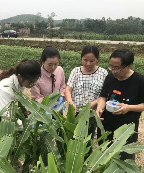 上海市农科院生态所害虫生态防控科研团队侧记