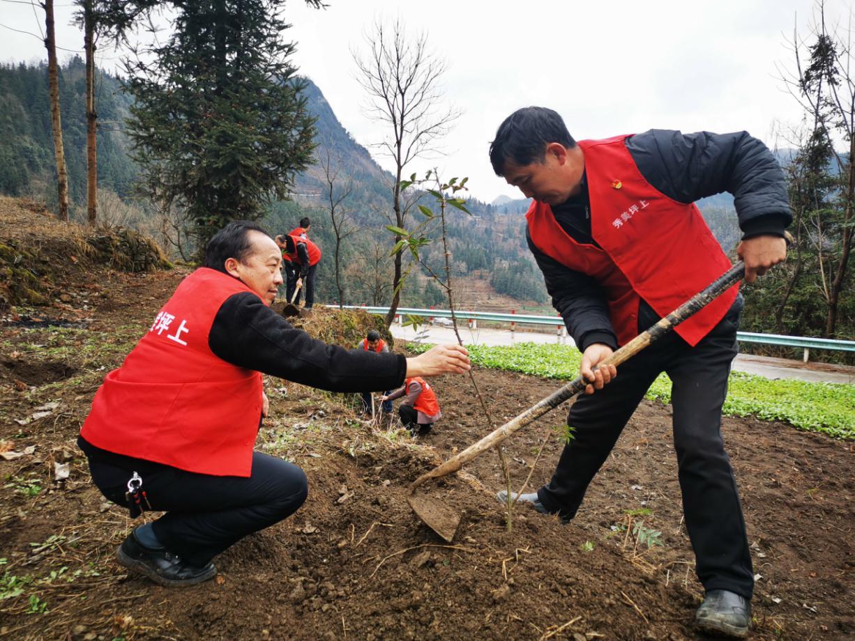 贵州安顺市:今日种下花椒苗 来年长成摇钱树