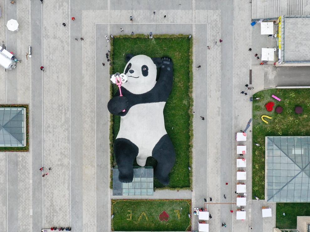 """四川都江堰:""""熊貓之都""""迎新寵"""
