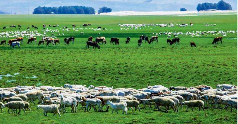 草原畜牧業圖片.jpg