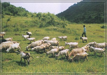 第十九届中国畜牧业博览会将于5月18-20日在南昌召开