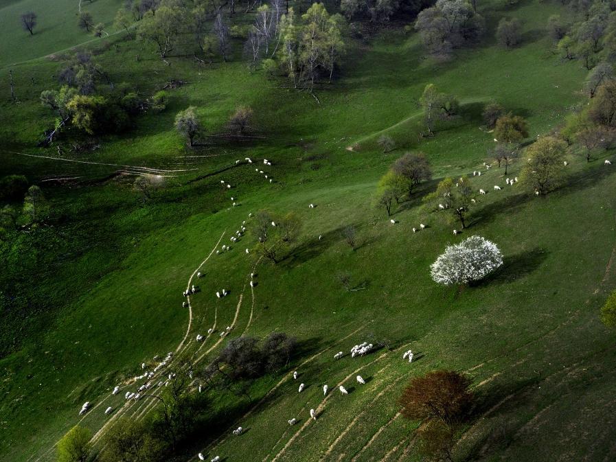 春风梳只看到了一个驼背妆草原绿遍野山花游∏人醉
