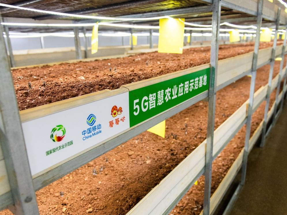 湖南湘潭:5G技术助力特色种植