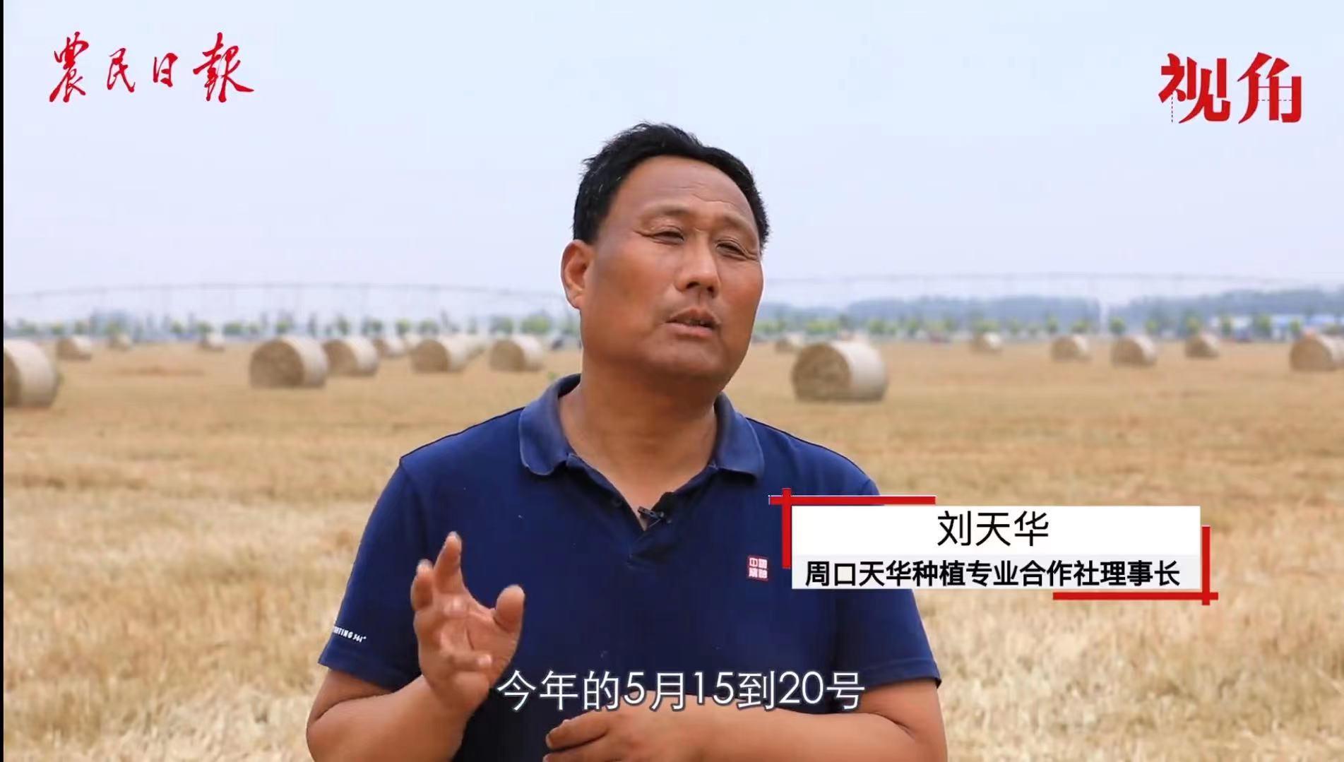 看三夏|不怕倒伏不怕干旱!高标准农田大展身手